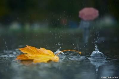 Есть рекорд. Столько дождей в сентябре не было с 1885 года