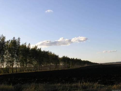 Слишком жарко, слшиком сухо. Рязанские леса закрыты для посещения