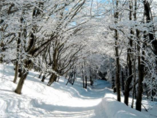 Новый год рязанцы встретят с зимней погодой