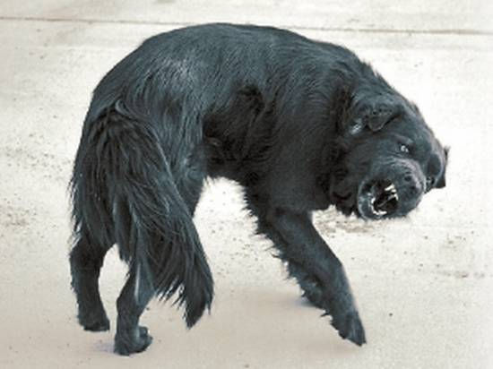 В Сидоровке установлен карантин по бешенству животных