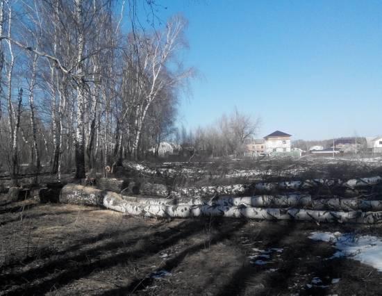 вырубка лесов в рыбном