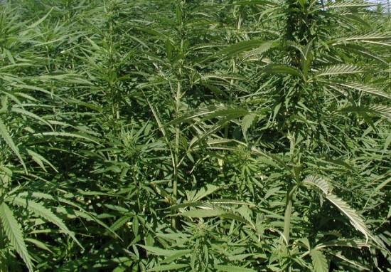 Задержали с 5 кг марихуаны