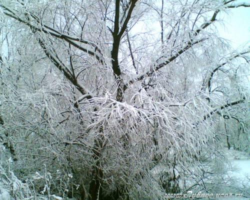 С пятницы в Рязанскую область прийдут морозы