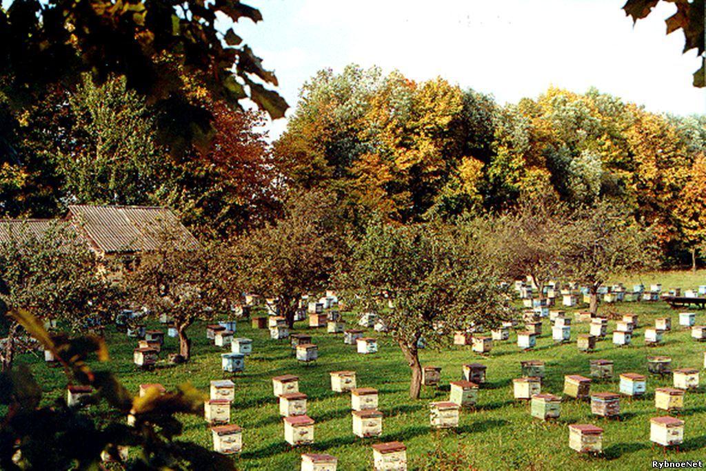 Музей-институт пчеловодства в Рязанской области городе Рыбное