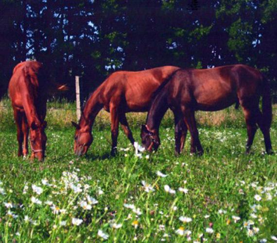 Научно-исследовательский институт коневодства
