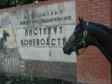 В Рыбновском районе подумываеют о создании конного театра-музея