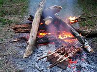 С 20 апреля в рязанских лесах запрещено разводить костры