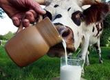 Очередная партия коров из Дании