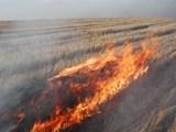 В районе Спасска в огне пропало 20 га пшеницы