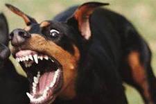 Минимум 20 человек ежегодно страдают от укуса диких животных в Рязанской области