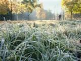 Гидрометцентр: на этой неделе будет замрозки до -6 градусов